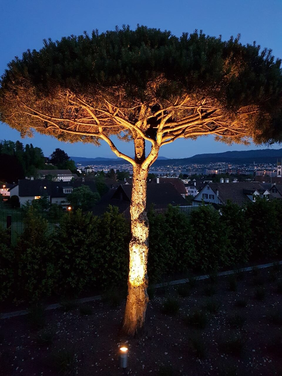 Lichtraum Freiburg: Baum stimmungsvoll in Szene gesetzt