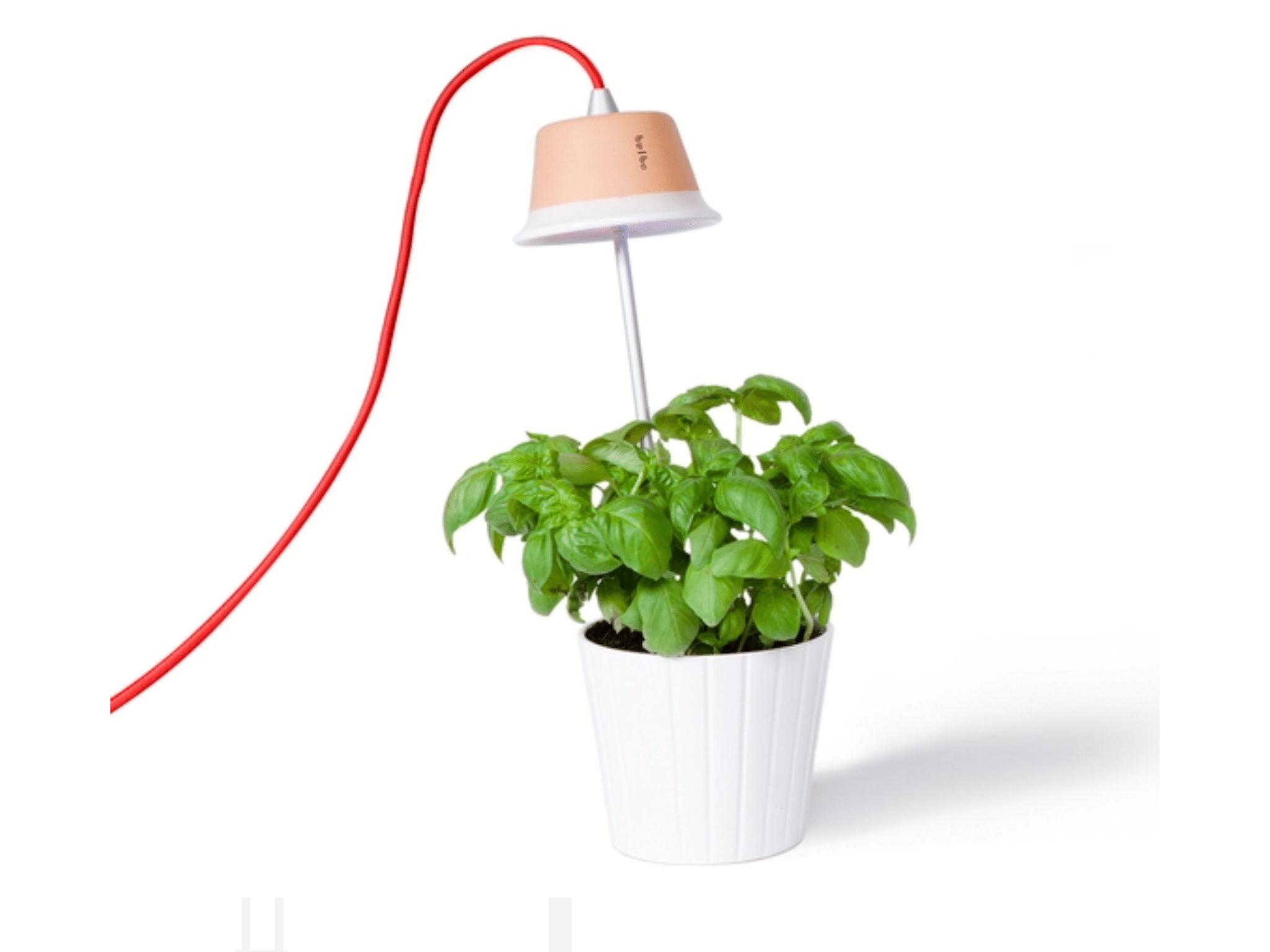 Tischlampe und Pflanzenlampe