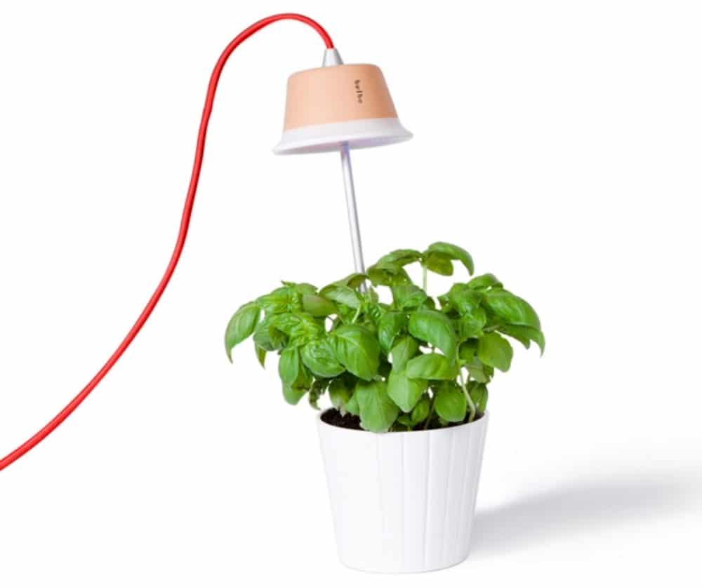 Pflanzenleuchte - Designlampe